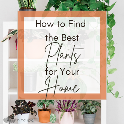 How to Find the Best Plants for Your Home